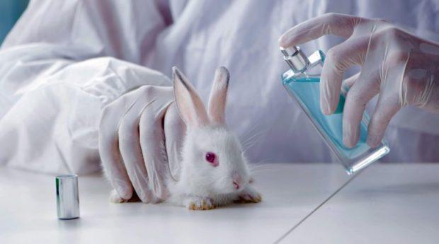 заборона тестування на тваринах