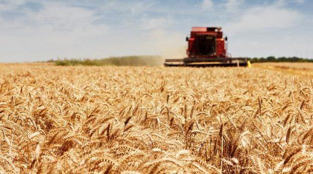 Україна візьме у Міжнародного банку 200 мільйонів на сільське господарство