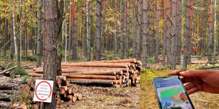 лес в смартфоне